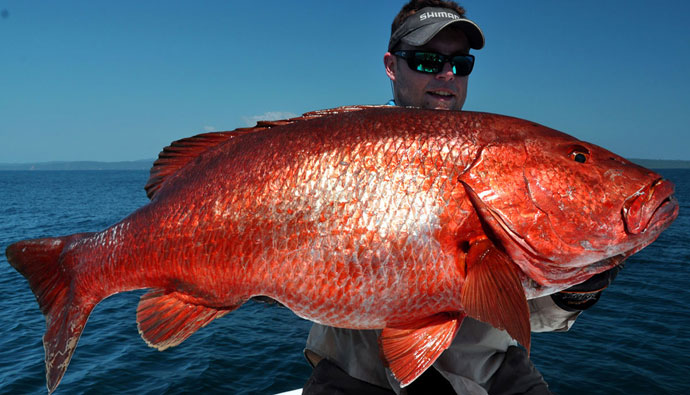 What You'll Need To Know About Red Snapper Fishing This Season