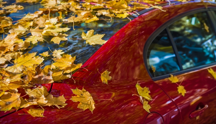 Leaves Leave A Scratch On Your Car